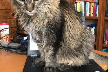 Dimmu the cat is hard at work. Photo submitted by Maria A. Telles, PhD, assistant to the department head at the College of Medicine – Tucson's Department of Medical Imaging.