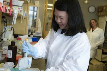 Rachel Wong, a graduate trainee in the Bhattacharya Lab is pictured validating the COVID-19 antibody test.