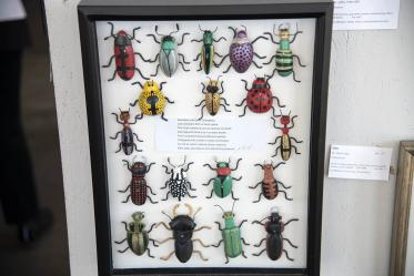 "Jeffrey Fisher's entry, ""Coleoptera."" Fisher works for University of Arizona College of Medicine – Phoenix, Department of Internal Medicine."