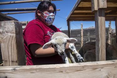 A girl holds a lamb in Tuba City, Ariz. on the Navajo Nation. Her family received supplies from the University of Arizona Cancer Center's drive, which supplied, sanitizer, paper towels, food, and water.