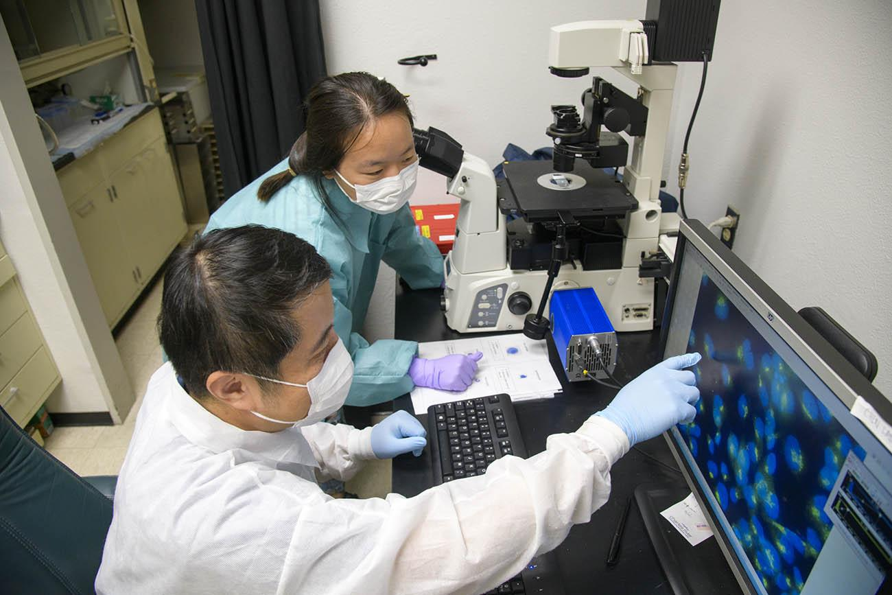 Yin Chen, PhD, points to an image of magnified virus-infected cells in his lab.