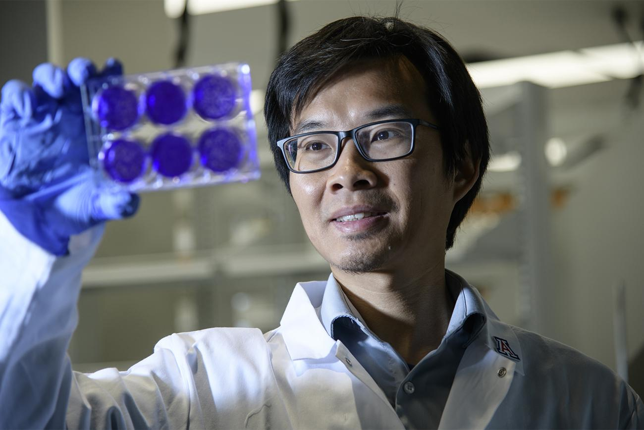 Jun Wang, PhD, looks at cells infected with a virus to see if an antiviral drug candidate shows promise.