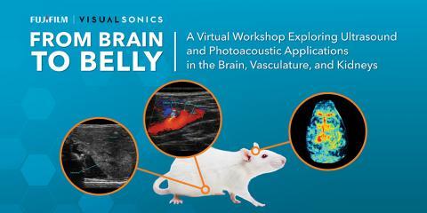 Brain to Belly workshop